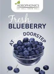 A Grade Imported Fresh Blueberries, Packaging Type: punnet, Packaging Size: 125gm