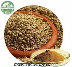 Organic Ajwain Powder, Carom Seed Powder USDA Approved