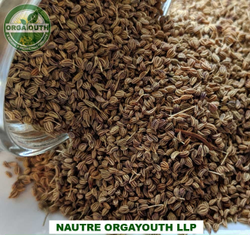 Whole Natural Organic Ajwain Seed - Carom Seed, Packaging Size: 25 KG