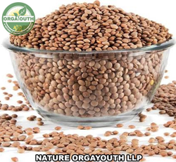 Organic Masoor Whole / Masoor Brown / Lentil, Pan India, Packaging Size: 50 Kg