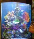 Artificial Reef Aquarium