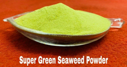 Super Green Seaweed Powder