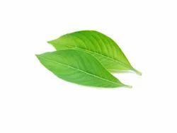 ADATHODA VASICA Green Aadathodai leaf powder, Packaging Type: Packet, Packaging Size: 50g