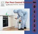 Termite Pest Control Services, In Local