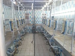 Swing Over Milking Parlor 10