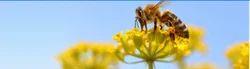 Honey Bee Snakes Pest Control Service