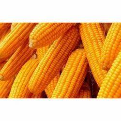 Dried Organic Sweet Corn, Packaging Type: Pp Bag