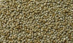 Pearl Millet (Bajra), No Preservatives And Organic