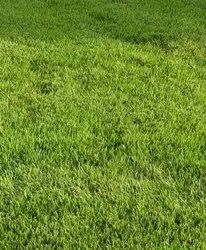 Green Well Watered Natural Lawn Grass
