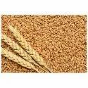 Organic Milling Wheat