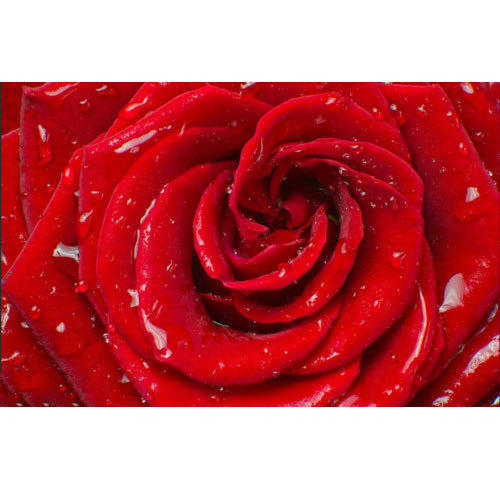 Pvc Rose Flower Printed Wallpaper Size 5 Sq M Rs 3000 Roll Apna Traders Id 18570446455