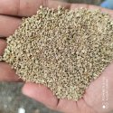 Natural Green Bold Ajwain Seeds, Grade Available: Grade A