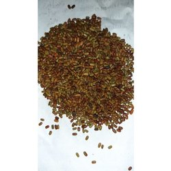 Sesbania Sesban Seeds
