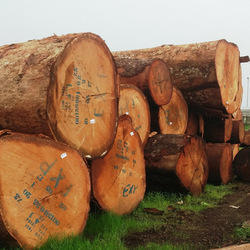 Rose Wood Logs - Rosewood Logs Latest Price, Manufacturers & Suppliers