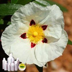 Labdanum Essential Oil
