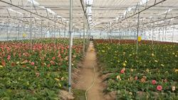 Polyhouse Drip Irrigation Service