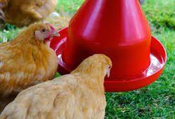 Poultry Drinker Feeder