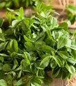 Fresh Methi Leaves