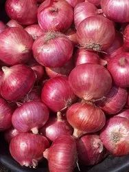 Maharashtra Dry A Grade Red Onion, Packaging Size: 50 Kg, Onion Size Available: Large