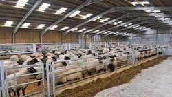Cow Farm Sheds