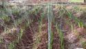 Spray Irrigation Kit 1/4 Acre