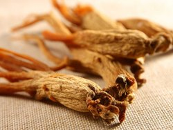 American Ginseng Extracts