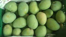 Anandha Green Fresh Mango, Packaging Type: Carton