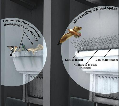 Birds Spikes - Poly-carbonate Birds Spike Importer from Delhi