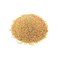 B Grade Poppy Seeds