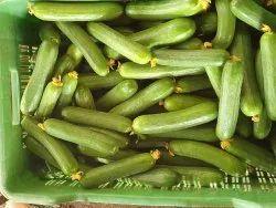 Maharashtra A Grade Fresh Cucumbers, Carton, 20 Kg