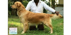 Dog Show Training Services