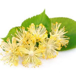 Linden Flower Extract