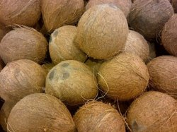 Dried Coconut Ball, Packaging Size: 25 Kg, Coconut Size: 10 inches - 14 inches