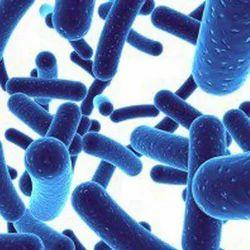 Lactobacillus Reuteri Probiotics