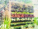 Green Bio Wall