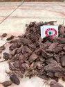 Black Cardamom Whole Natural Black Large Cardamom, Packaging Size: 5 Kg, Whole