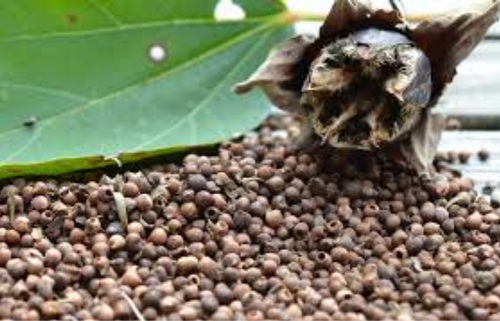 Hibiscus Seeds View Specifications Details Of Seeds By Harsh