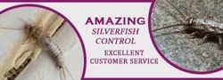 in Home Bee Silverfish Control Service