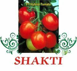 Shakti  F-1 Hybrid Tomato Seed