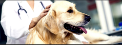 Soft Tissue Procedures Treatment Services For Pet
