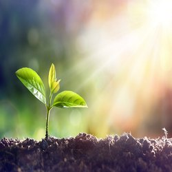 Super Culture Aerobic Biocomposting System