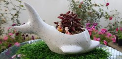 Dolphin Ceramic Pots for Indoor Plants