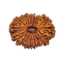Brown 18 Mukhi Rudraksha