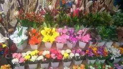 Flowering Plant in Thane, फ्लॉवरिंग प्लांट