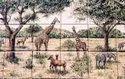 Scenery Tiles