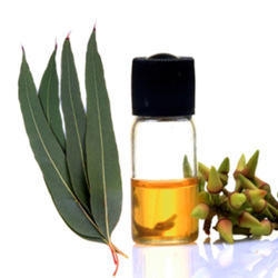 Pale Yellow Steam Distillation Eucalyptus Oil 60%, For Cosmetics, And Pharmaceutical