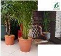 Coir Garden 12 Inch Round Coir Mulch Mat