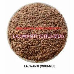 Lajwanti Chui Mui Seed