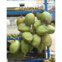 Fresh Tender Coconut a grade