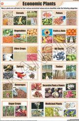 Economic Plants For General Chart